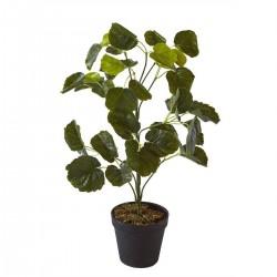 "Plante""Olla"""