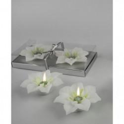 2 Bougies ponsettia blanche